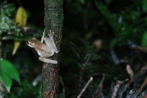 Sortie du soir en Amazonie