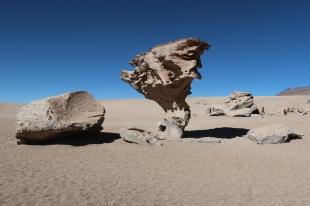 Arbol de roca
